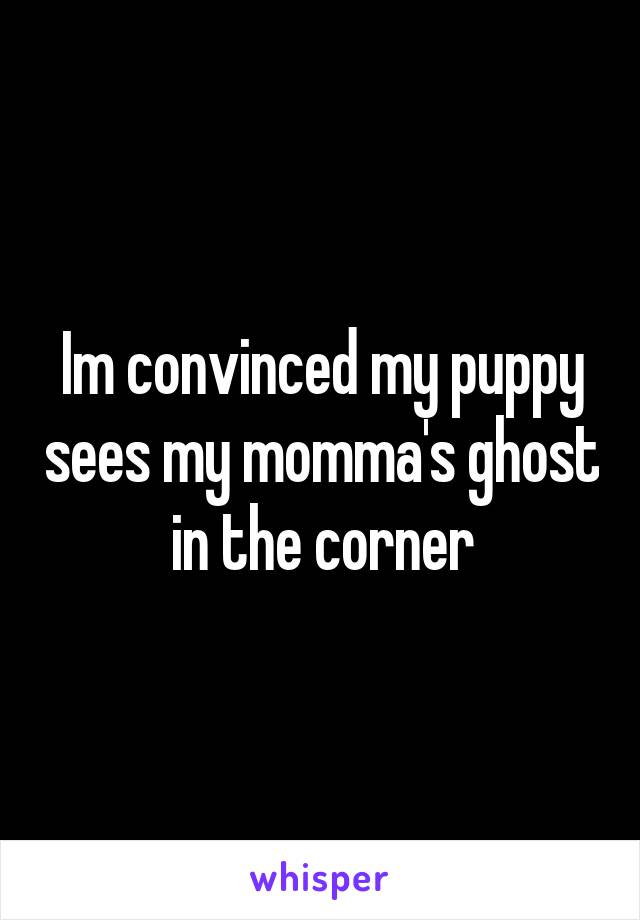 Im convinced my puppy sees my momma's ghost in the corner