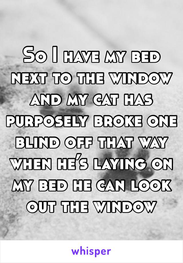 So I have my bed next to the window and my cat has purposely broke one blind off that way when he's laying on my bed he can look out the window