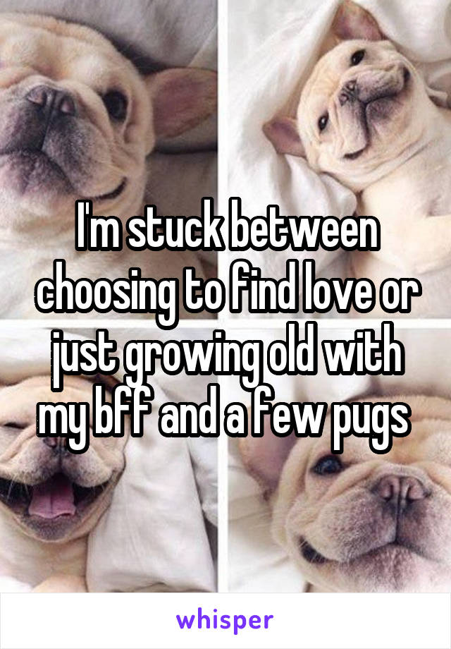 I'm stuck between choosing to find love or just growing old with my bff and a few pugs