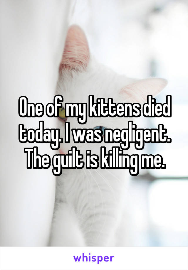 One of my kittens died today. I was negligent. The guilt is killing me.