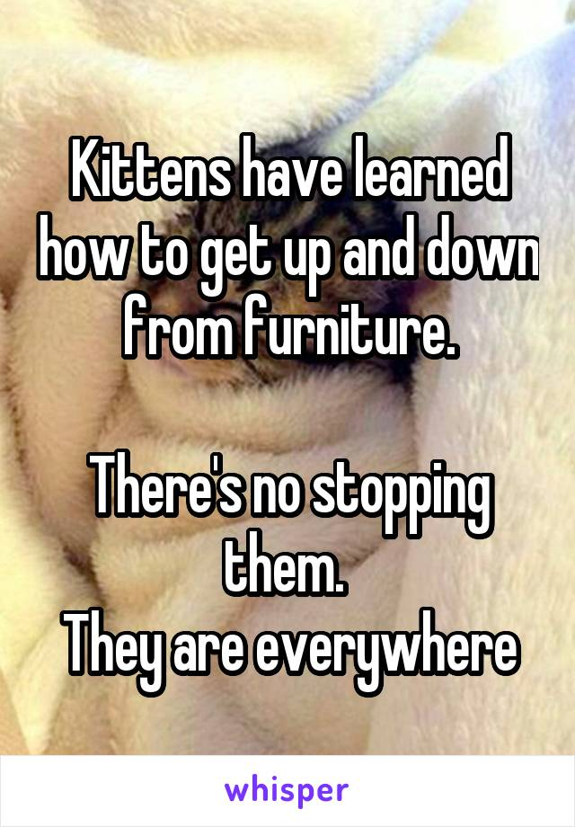 Kittens have learned how to get up and down from furniture.  There's no stopping them.  They are everywhere