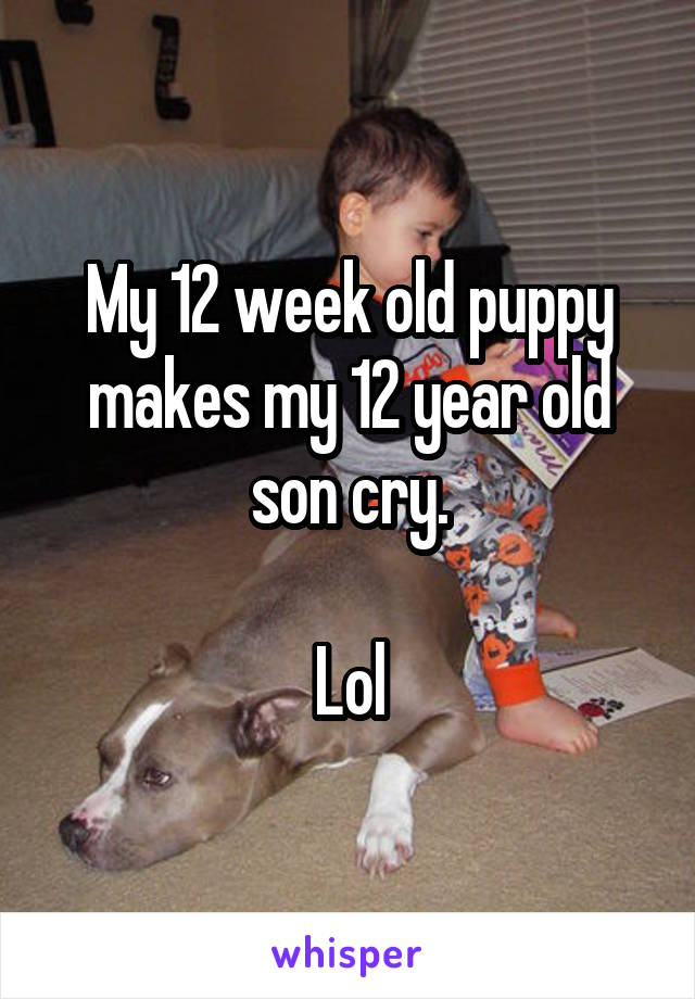 My 12 week old puppy makes my 12 year old son cry.  Lol