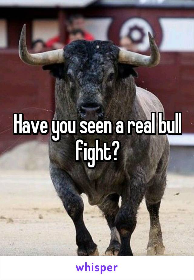 Have you seen a real bull fight?