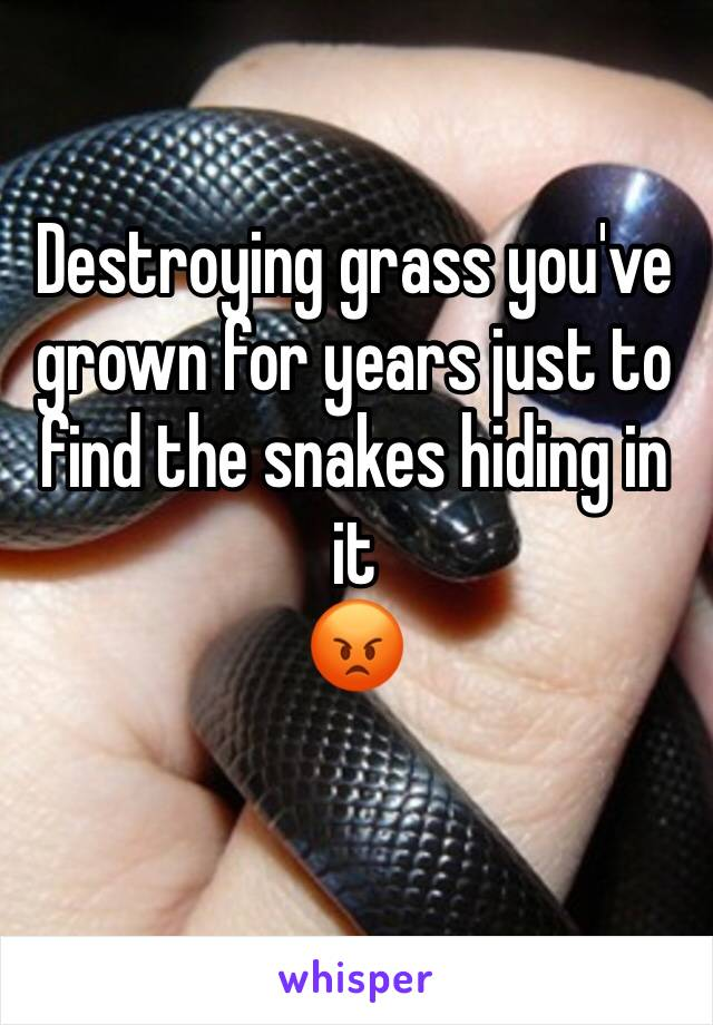 Destroying grass you've grown for years just to find the snakes hiding in it  😡