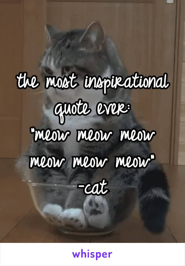 """the most inspirational quote ever: """"meow meow meow meow meow meow"""" -cat"""
