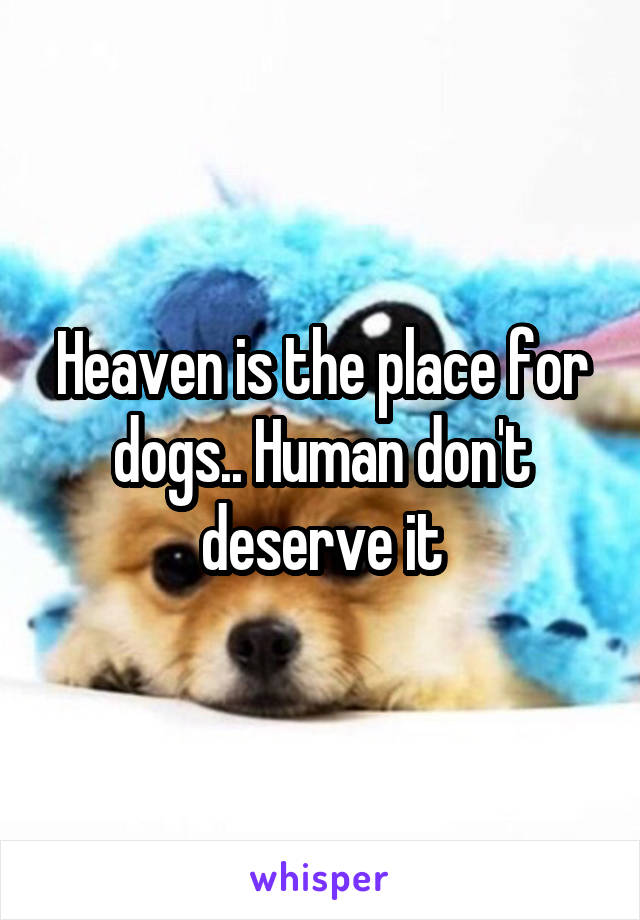Heaven is the place for dogs.. Human don't deserve it