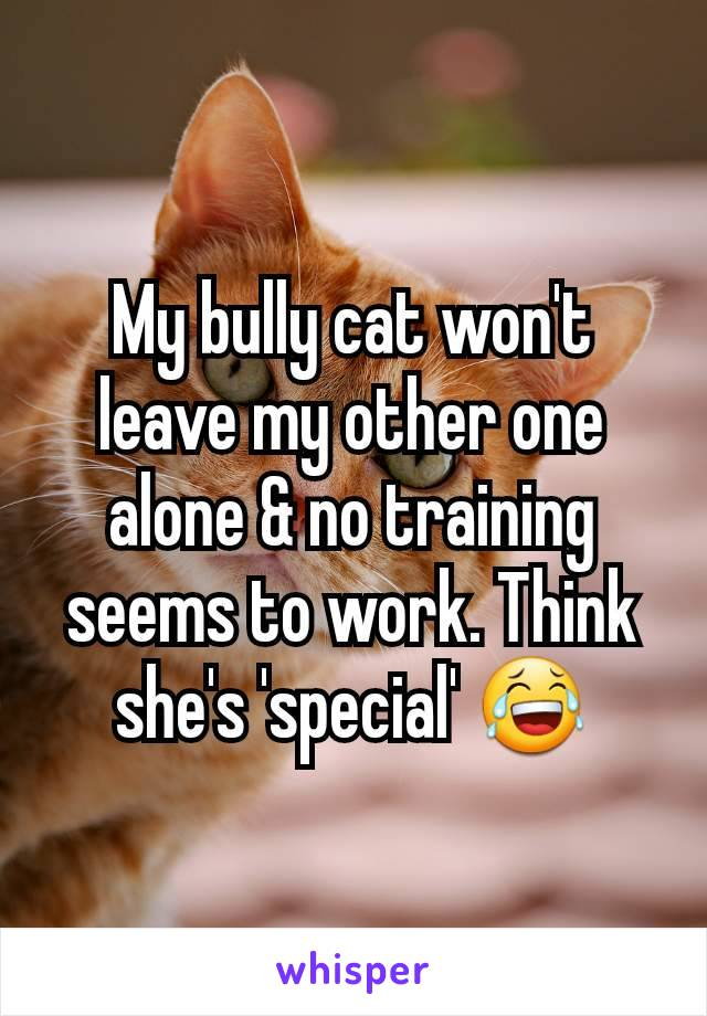 My bully cat won't leave my other one alone & no training seems to work. Think she's 'special' 😂