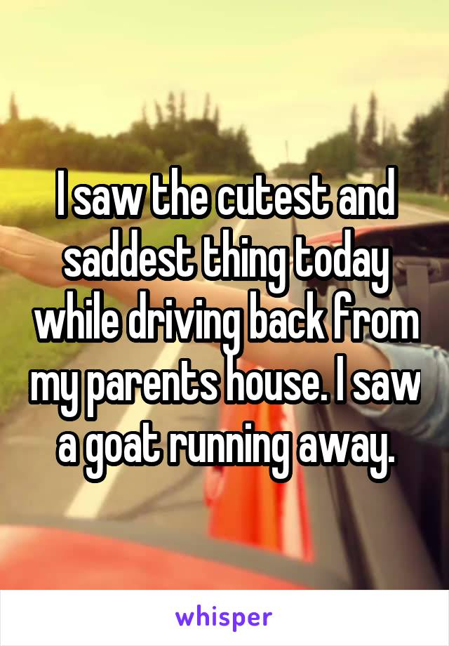 I saw the cutest and saddest thing today while driving back from my parents house. I saw a goat running away.