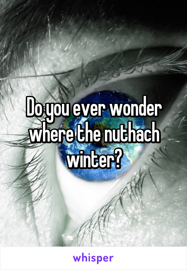 Do you ever wonder where the nuthach winter?