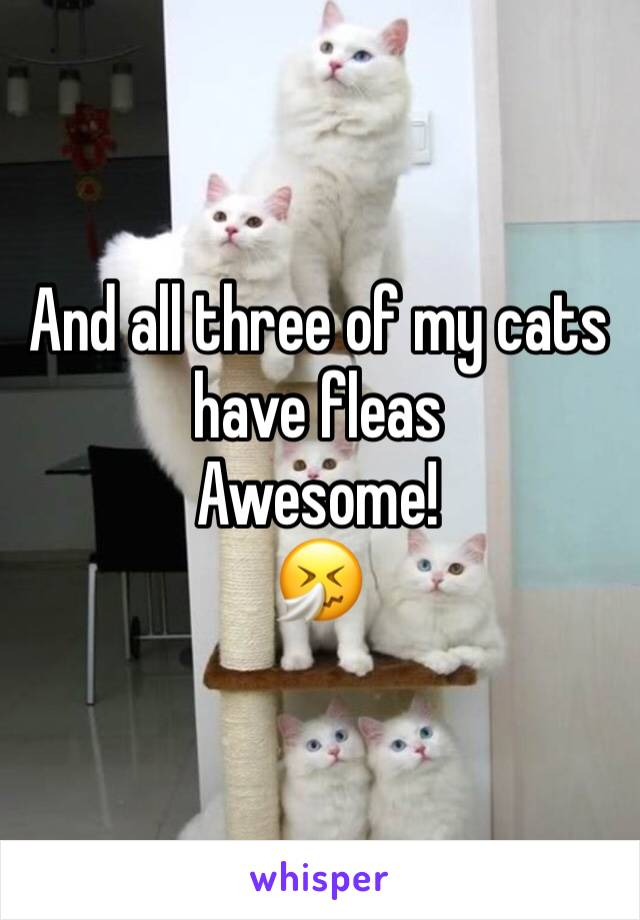 And all three of my cats have fleas Awesome!  🤧