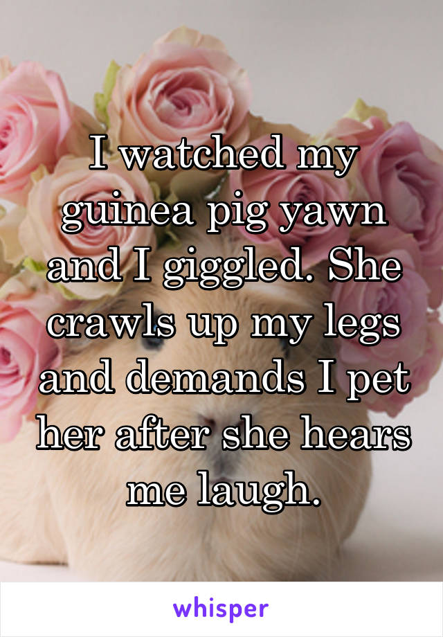 I watched my guinea pig yawn and I giggled. She crawls up my legs and demands I pet her after she hears me laugh.