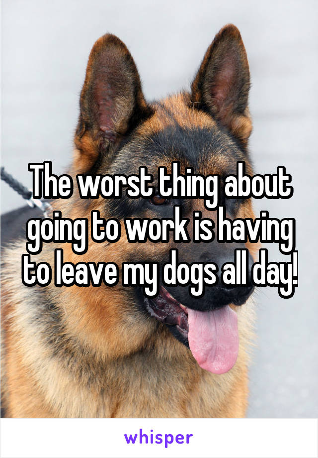The worst thing about going to work is having to leave my dogs all day!