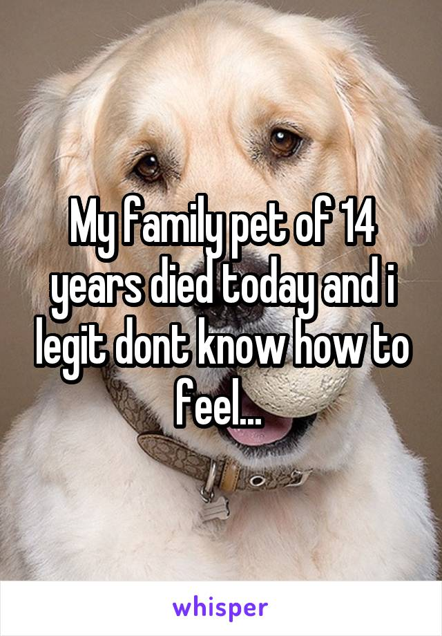 My family pet of 14 years died today and i legit dont know how to feel...
