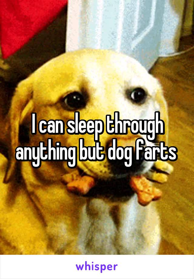 I can sleep through anything but dog farts