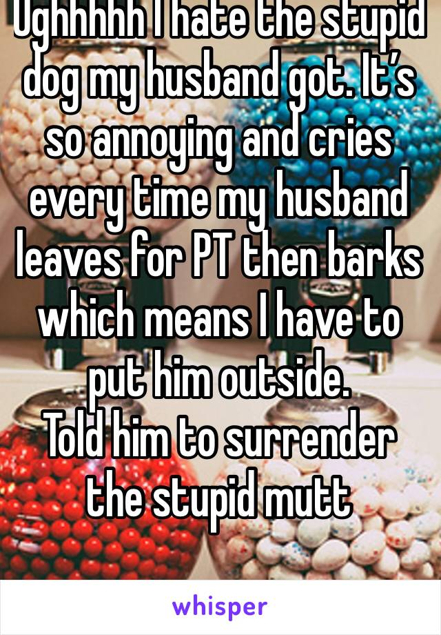 Ughhhhh I hate the stupid dog my husband got. It's so annoying and cries every time my husband leaves for PT then barks which means I have to put him outside.  Told him to surrender the stupid mutt