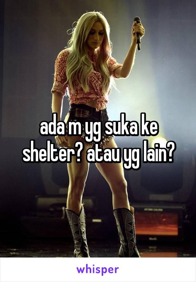 ada m yg suka ke shelter? atau yg lain?