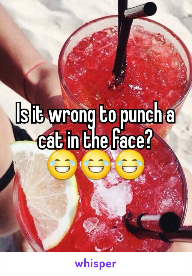Is it wrong to punch a cat in the face? 😂😂😂