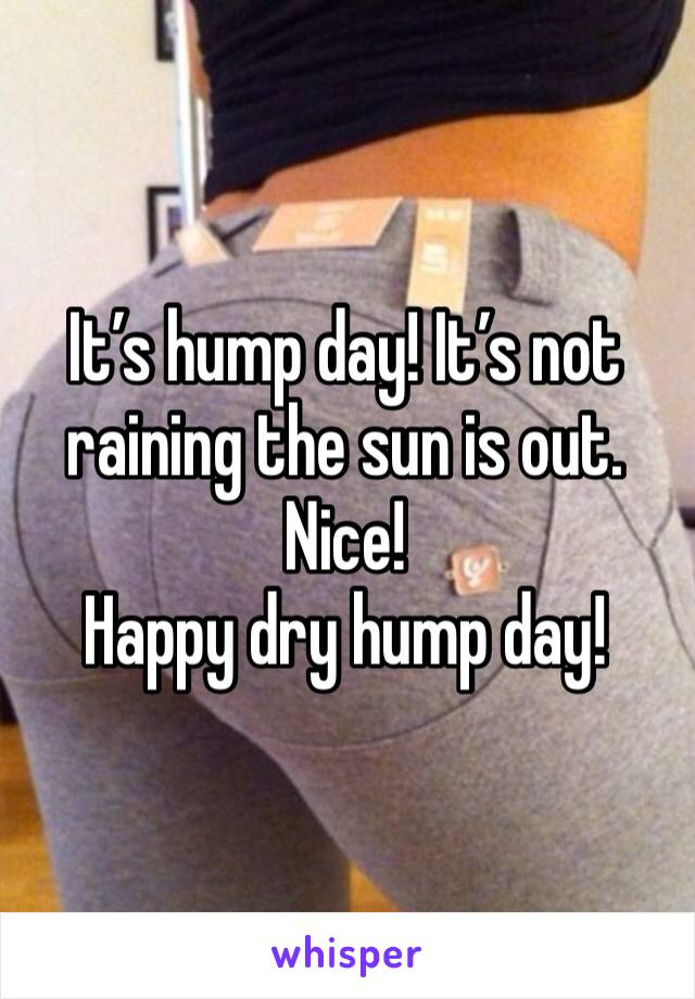 It's hump day! It's not raining the sun is out. Nice!  Happy dry hump day!
