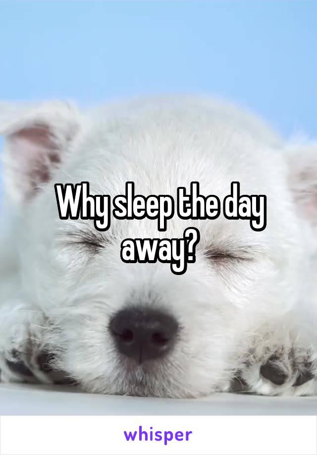 Why sleep the day away?