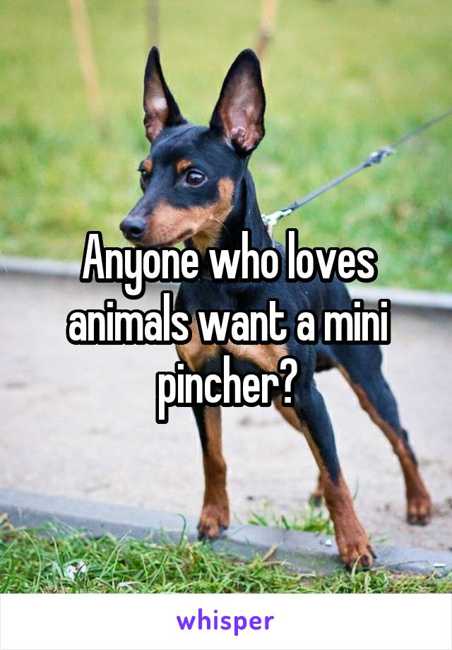 Anyone who loves animals want a mini pincher?