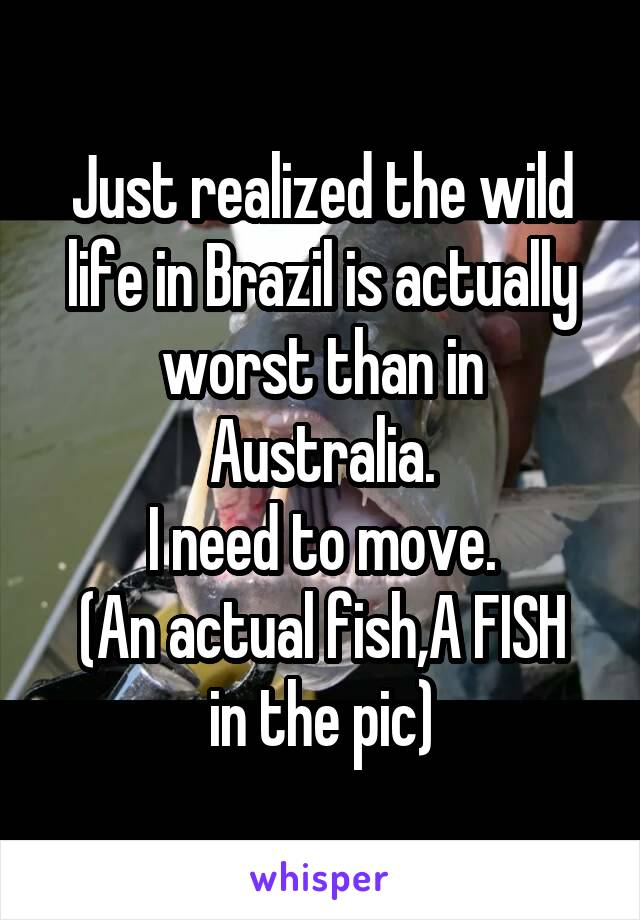 Just realized the wild life in Brazil is actually worst than in Australia. I need to move. (An actual fish,A FISH in the pic)