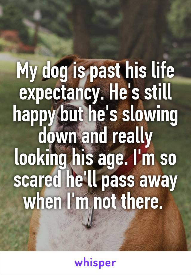 My dog is past his life expectancy. He's still happy but he's slowing down and really looking his age. I'm so scared he'll pass away when I'm not there.