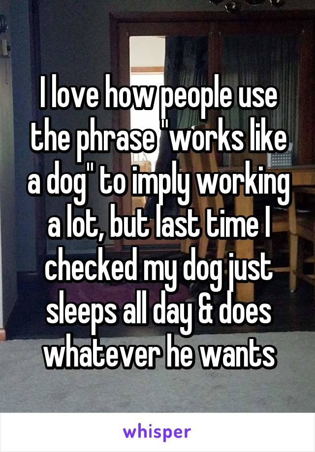 """I love how people use the phrase """"works like a dog"""" to imply working a lot, but last time I checked my dog just sleeps all day & does whatever he wants"""