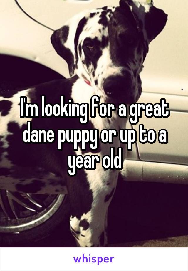 I'm looking for a great dane puppy or up to a year old