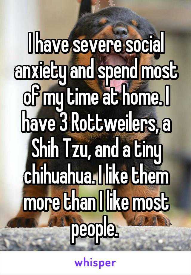 I have severe social anxiety and spend most of my time at home. I have 3 Rottweilers, a Shih Tzu, and a tiny chihuahua. I like them more than I like most people.