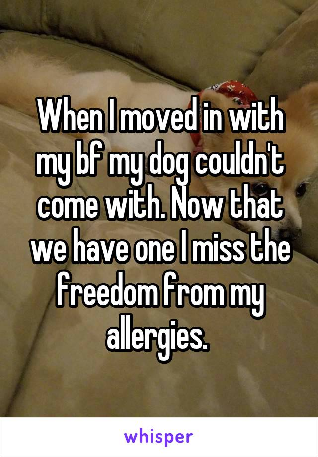 When I moved in with my bf my dog couldn't come with. Now that we have one I miss the freedom from my allergies.