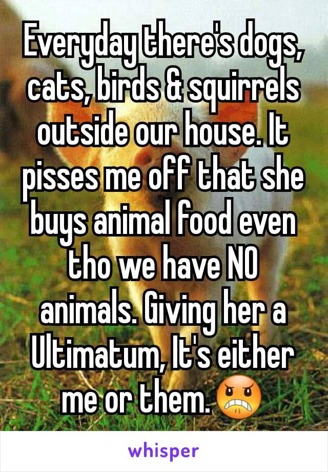 Everyday there's dogs, cats, birds & squirrels outside our house. It pisses me off that she buys animal food even tho we have NO animals. Giving her a Ultimatum, It's either me or them.😠