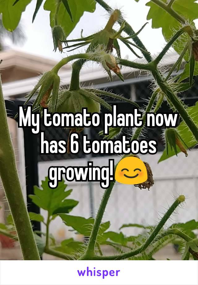 My tomato plant now has 6 tomatoes growing!😊