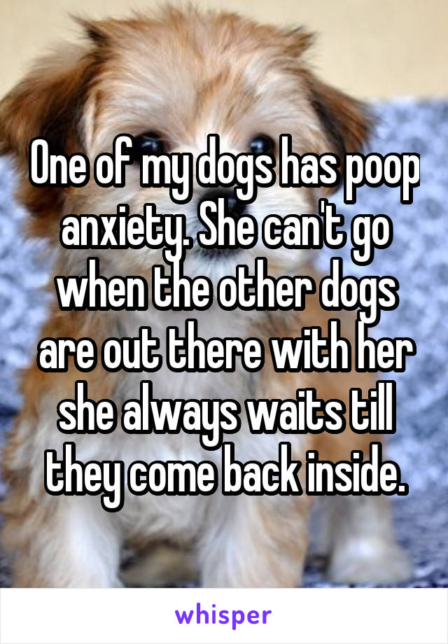 One of my dogs has poop anxiety. She can't go when the other dogs are out there with her she always waits till they come back inside.