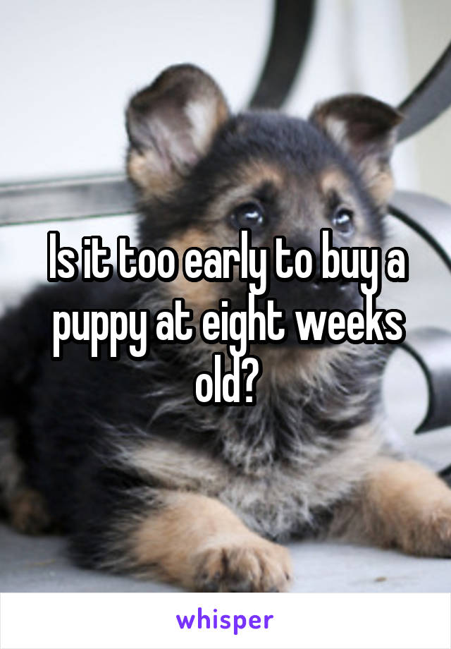 Is it too early to buy a puppy at eight weeks old?