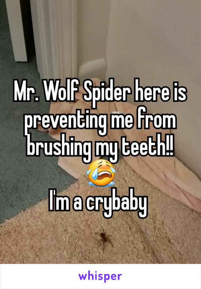 Mr. Wolf Spider here is preventing me from brushing my teeth!! 😭 I'm a crybaby