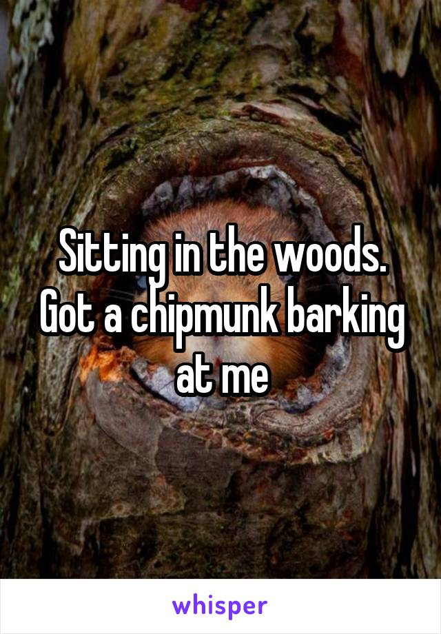 Sitting in the woods. Got a chipmunk barking at me