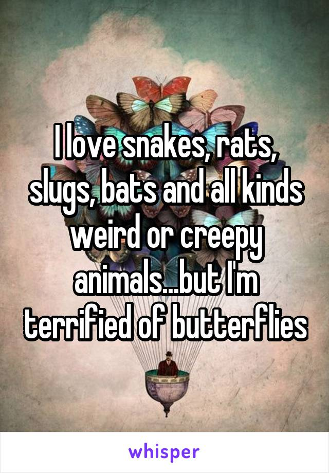 I love snakes, rats, slugs, bats and all kinds weird or creepy animals...but I'm terrified of butterflies