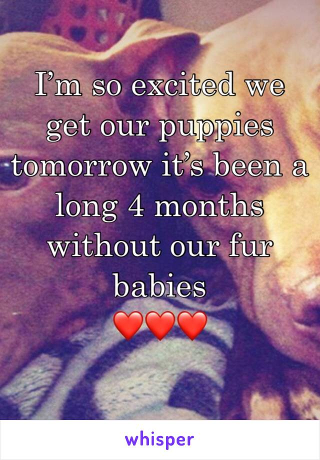 I'm so excited we get our puppies tomorrow it's been a long 4 months without our fur babies  ❤️❤️❤️