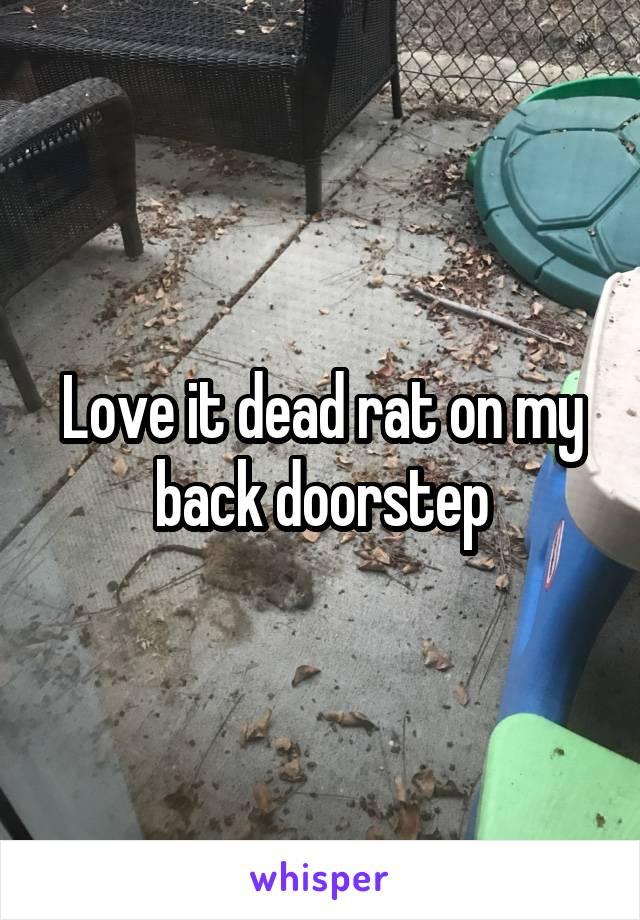 Love it dead rat on my back doorstep