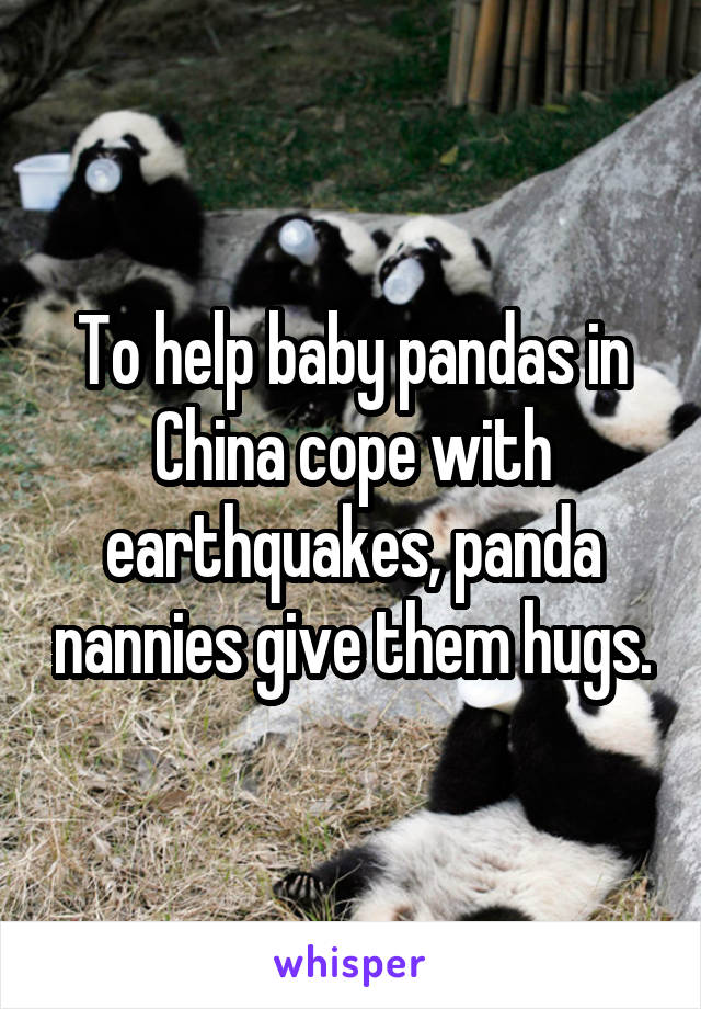To help baby pandas in China cope with earthquakes, panda nannies give them hugs.