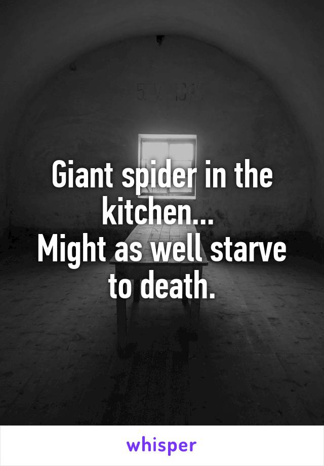 Giant spider in the kitchen...  Might as well starve to death.