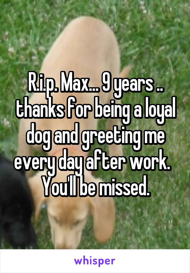 R.i.p. Max... 9 years .. thanks for being a loyal dog and greeting me every day after work.   You'll be missed.