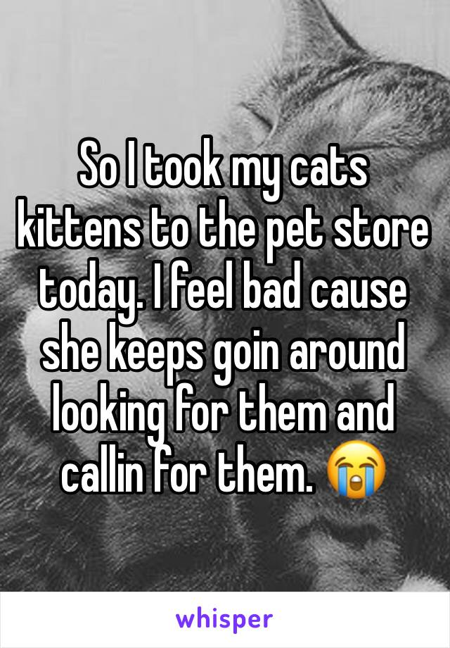 So I took my cats kittens to the pet store today. I feel bad cause she keeps goin around looking for them and callin for them. 😭