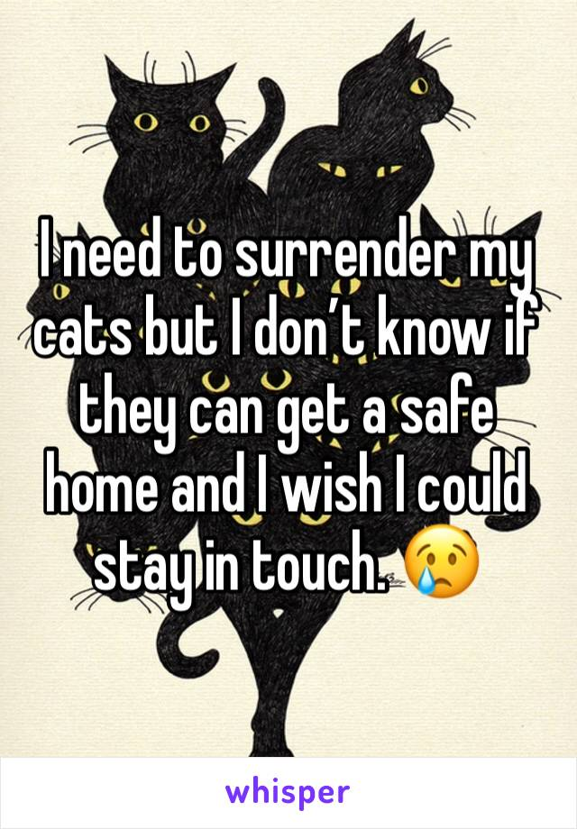 I need to surrender my cats but I don't know if they can get a safe home and I wish I could stay in touch. 😢