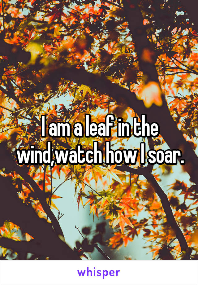 I am a leaf in the wind,watch how I soar.