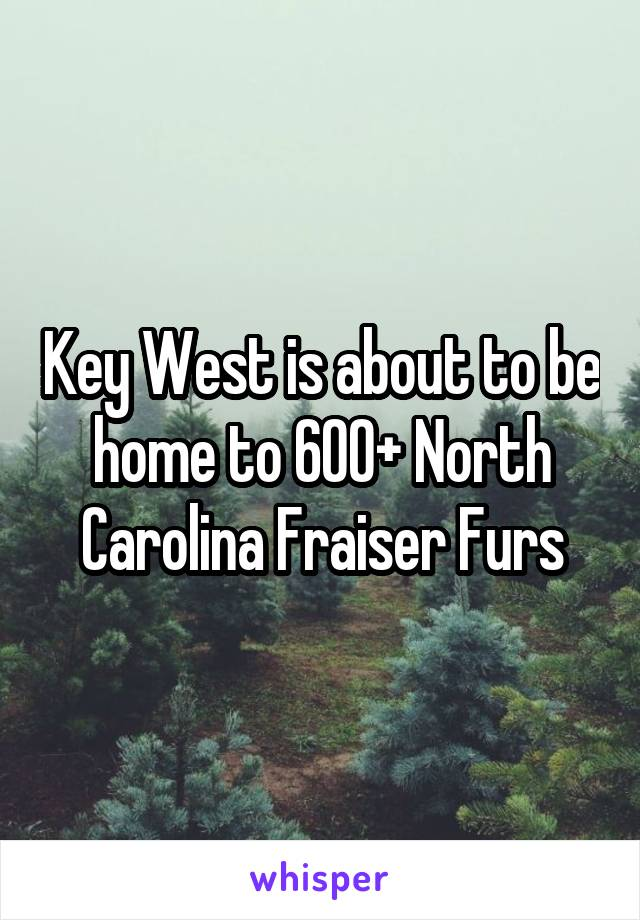 Key West is about to be home to 600+ North Carolina Fraiser Furs