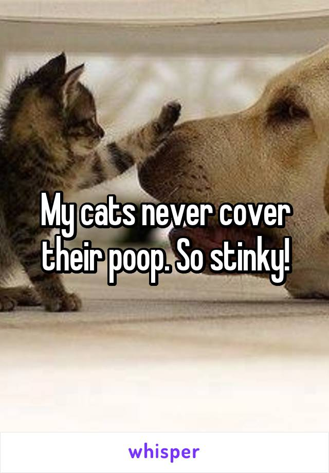 My cats never cover their poop. So stinky!