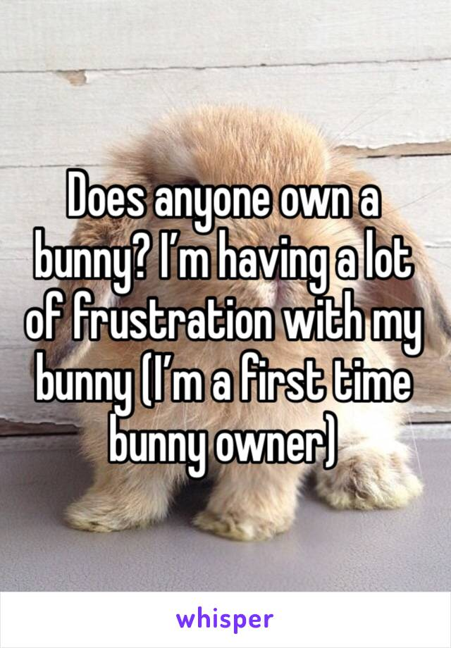 Does anyone own a bunny? I'm having a lot of frustration with my bunny (I'm a first time bunny owner)