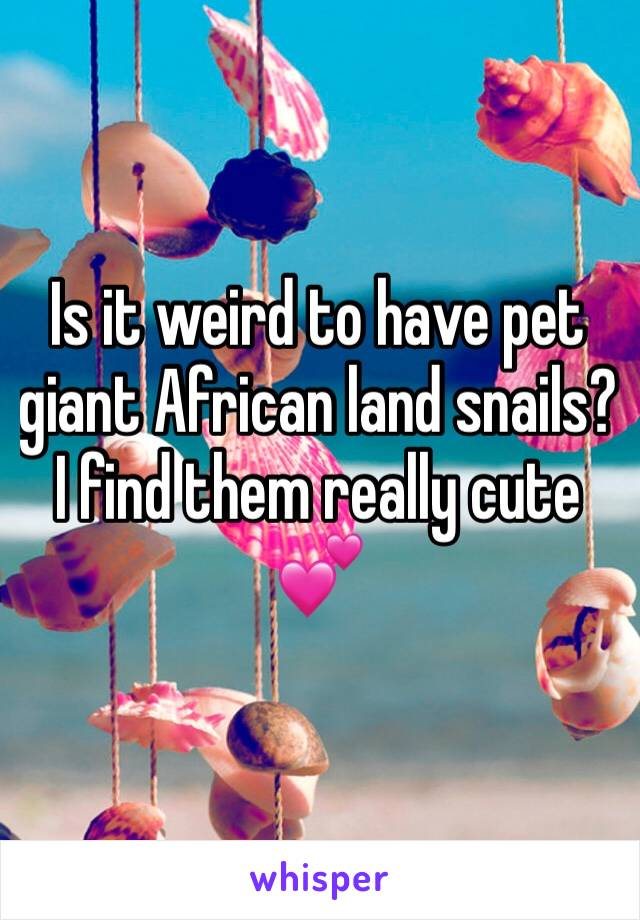 Is it weird to have pet giant African land snails? I find them really cute 💕