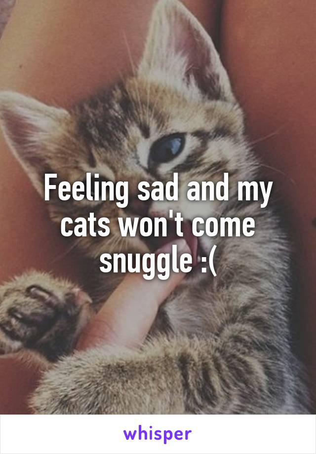 Feeling sad and my cats won't come snuggle :(